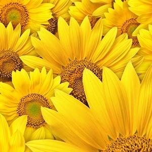 цвет фото желтый