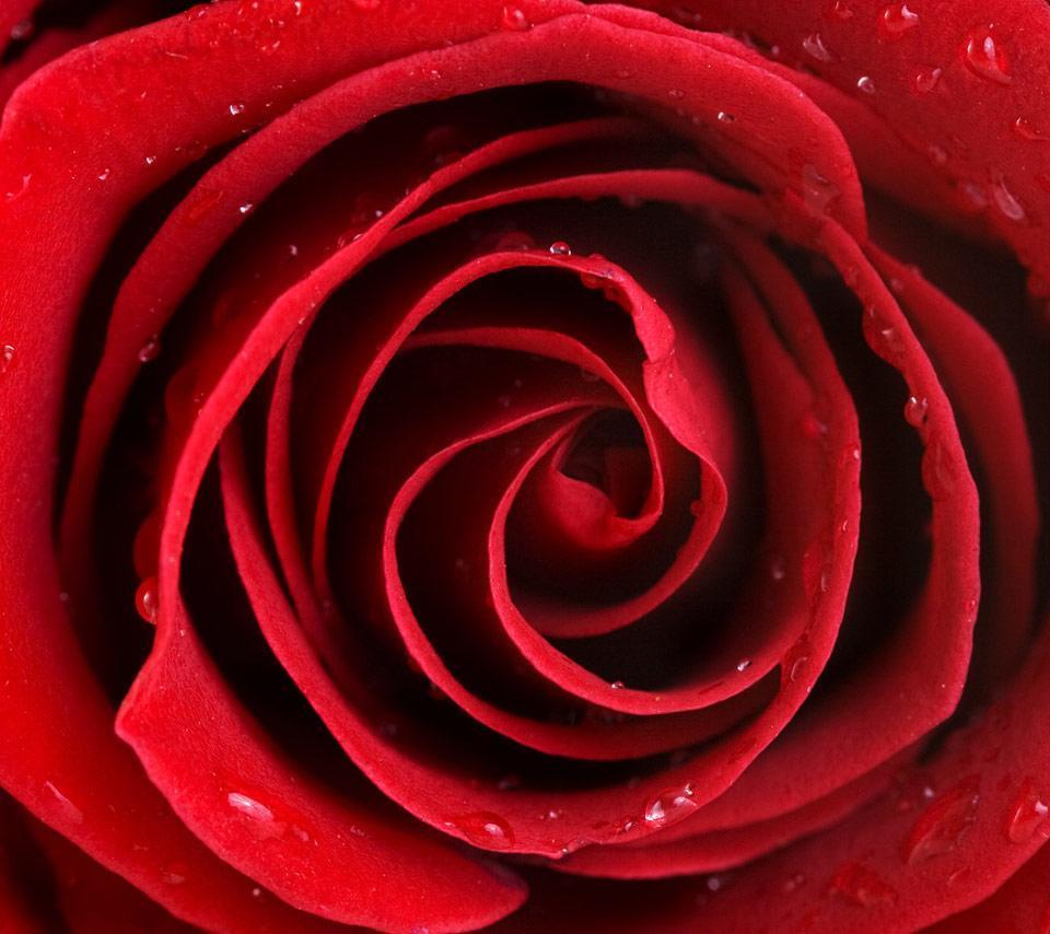 Красного цвета