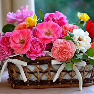 Цветы и приметы